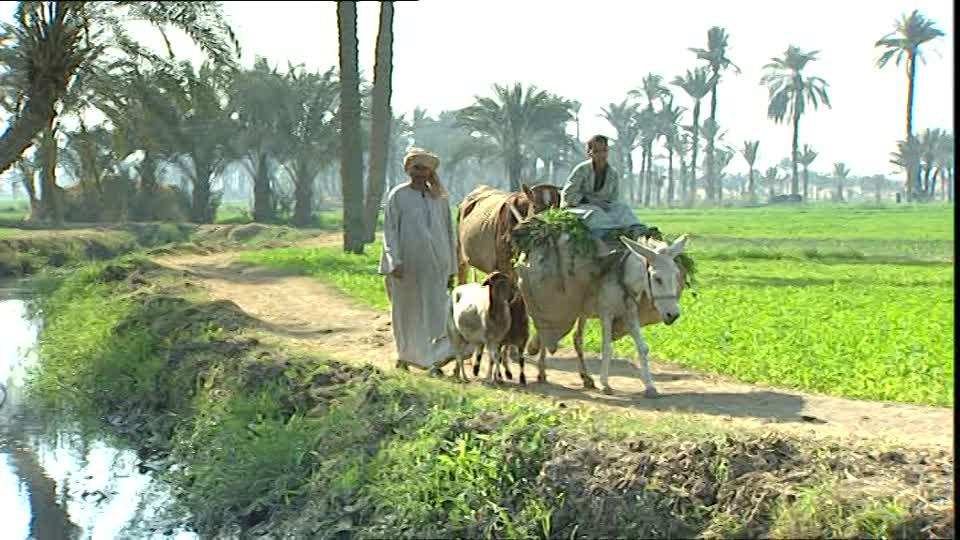 arabo con asino