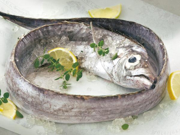 pesce-sciabola[1]